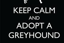 Greyhounds / by Linda Malinowski