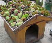 GREEN Roof / Green roof - garden.  Zahrada na střeše - pomozme Zemi.