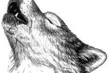 ART - How to draw animals / Come draw animals! How do it? Jak kreslit zvířata?
