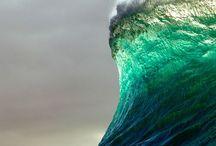 The wave / Sea animals