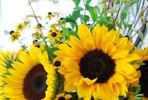 Sizzling Sunflowers / by Debbie Bowie