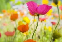 Beautiful Flowers  / by Hilary Hillis
