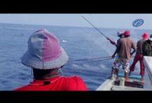 Aquaculture Videos
