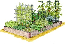 Backyard ideas and Gardening how to's / by Hilary Hillis