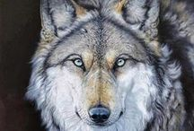Wolves in the sky / by Lady Loki