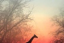 """Dreaming of Africa / """"Traveling is learning""""   - Kenyan Proverb"""