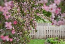 Spring Blooming Trees / From cherry blossoms to lilacs, it's hard to beat an early season flush of color. For a bolder statement, try these spring-blooming trees in your landscape!