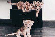 little & furry