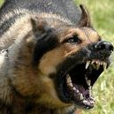 KON Series / KON/KON II, series is german shepherd is angry, to kon!!!  KON 3D/KON II/KON/KON III/KON 4