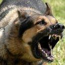 KON Series / KON/KON II, series is german shepherd is angry, to kon!!!  KON 3D/KON II/KON/KON III/KON 4