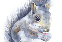 Squirrel Cuteness / My Mom saves squirrels that are knocked out of trees or hurt back to health and then re-released them ...so I had to add the cute little squirrels to my boards :) they are adorable ! / by Tammy Welch