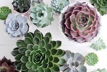 Succulents & Shrubberies