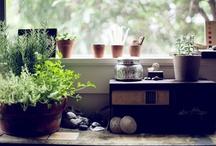 ❉ DIY jardín ❉ / it's the better side