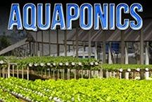 Outstanding Aquaponics / Outstanding aquaponics systems, tips and ideas for added food security and tastier nutrition from you backyard / by Ray K. Alan