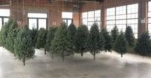 Suspended Forest: 2016 Public Art Christmas Tree Installation by artist Michael Neff / Neff has addressed the space at Knockdown Center by hanging a grid of 40 trees, which almost fills the room, yet leaves enough space between rows for viewers to walk amongst the trees, setting them gently spinning. The enclosed space also allows scent of pine to remain, a more pleasant experience than the scents of Metropolitan Avenue. More at: http://suspendedforest.com/
