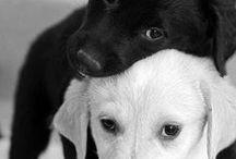 Puppy Love / by Jessica Romero