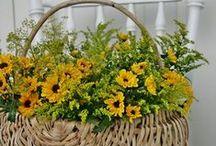 Cestos/ Baskets