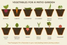 Gardening / by Angel Hartline
