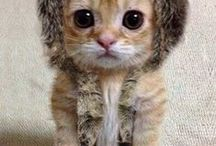 adorables chats
