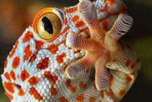 ReptileS / Reptiles and amphibians