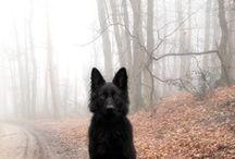 Dogs ♥ / by Jill Katherine
