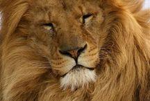 Animal Kingdom / Beauty of the beast / by Alvin Alamo
