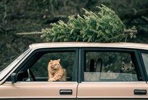 Tis the season. / by Hudson Lee