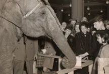 Digital storytelling / longreads / transmedia storytelling / web documentary / My first longread is 'Eddie the Elephant – The true story of a famous autographing party'