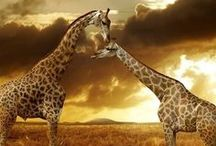 Fireside tales / Rangers' diary and African tales: Wildlife Photography and Safari Inspiration.