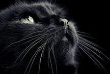 If I had a Kitty