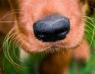 Pet Trivia | Name that Dog Breed / Can you name that dog breed? Give it a try.