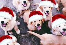 Pets and the Holidays / Tips and tricks to celebrating any holiday with your pets plus adorable holiday pet photos!