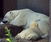 Maruyama Zoo / It is the board about  Maruyama Zoo. 札幌市の動物園、円山動物園のボードです。