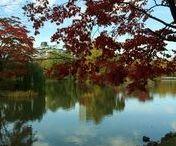 Autumn Leaves / 札幌市の紅葉についてのボードです。