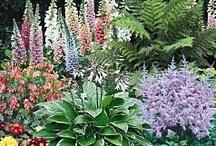 Garden Tips and Tricks / by Debby Whitsitt