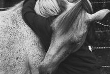 Amico Cavallo / Foto sui nostri amici cavalli