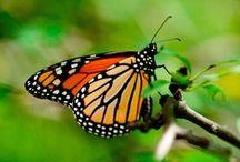 Butterfly Butterflies / Inspiration design from nature