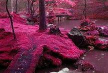 Japan  / Inspiration for my trip in March / April 2014