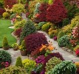 Garden Design, Textures, & Structures / Designs using a variety of shapes, plants with unique textures, and structures to create visual interest.