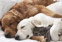 Tips para mascotas