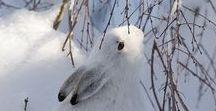 | Inverno | / #Winter