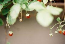 Future Garden / by Vanessa Kurowski