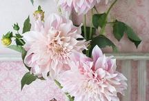 pink flower / by Ikumi Miyazaki