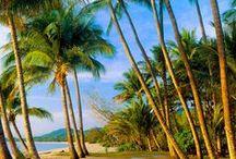 Palm Trees / Oh how I love palm trees! :)