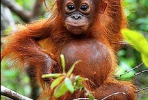 My travel bucket list / Slowly working on plans for these places ... have been to Borneo now. (3x)