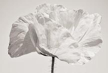 flowers / by Adriana Virgili