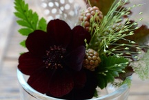 brown flower