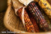 Ornamental Corn
