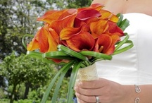 Orange Mini Callas / #Wedding Flowers- / by Bridesign Wedding Flowers