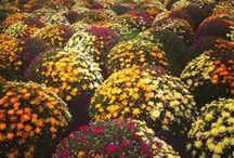 Gardening / Gardening, garden, landscaping, plants, flowers, vegetables